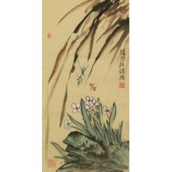 Narcissus - CNAG001065