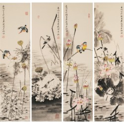 Kingfisher - CNAG001270