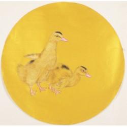 Ducks - CNAG001553
