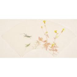Grasshopper - CNAG001584