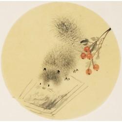 Squirrels - CNAG001589