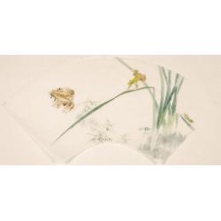 Grasshopper - CNAG001592