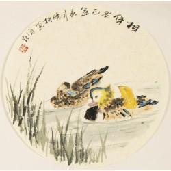 Mandarin Duck - CNAG001605