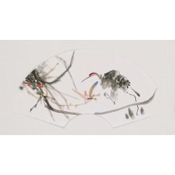Orchid - CNAG001730