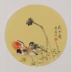 Mandarin Duck - CNAG001794