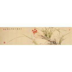 Orchid - CNAG003247