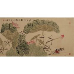 Mandarin Duck - CNAG003319