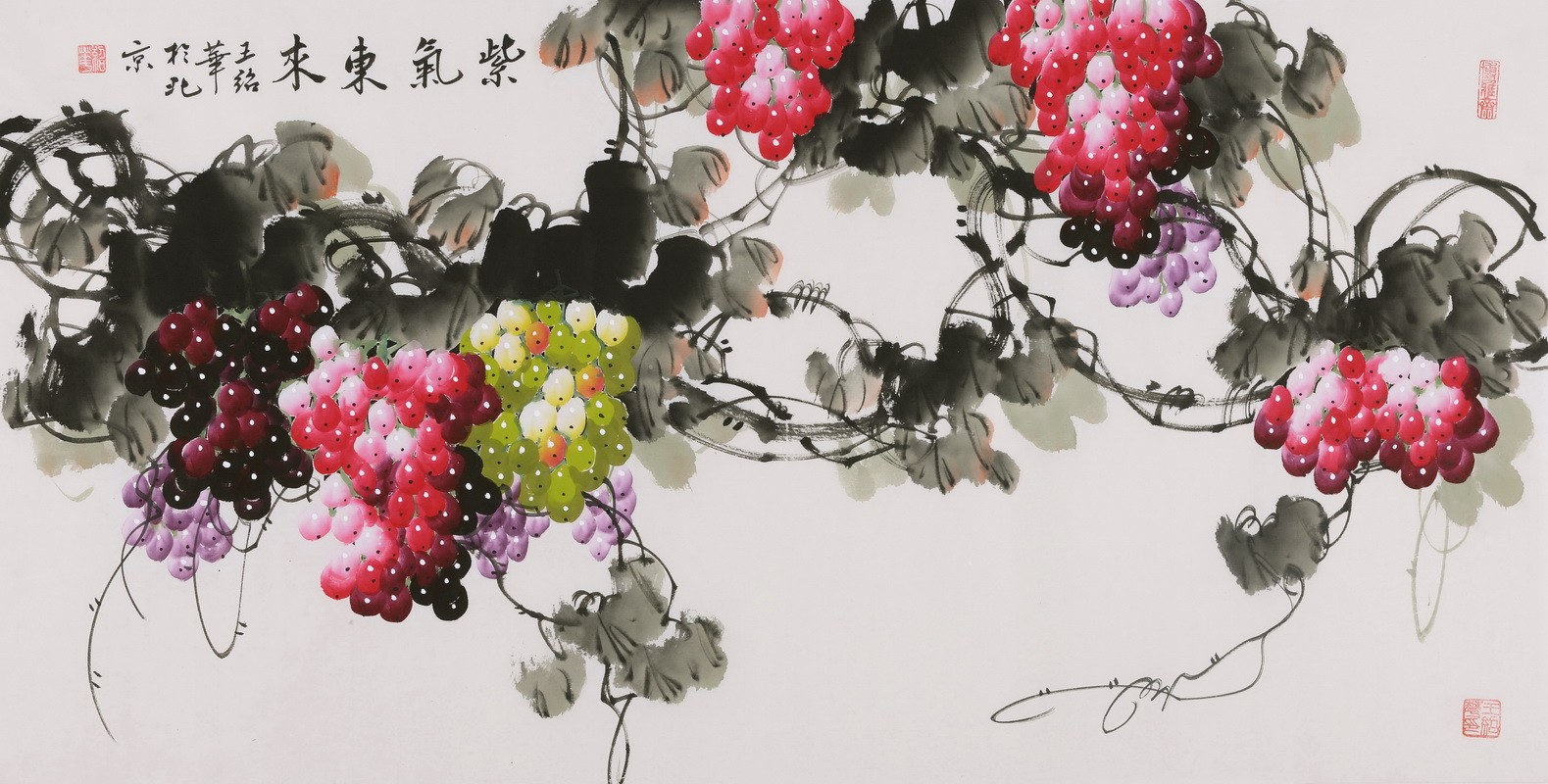 Grapes - CNAG003526