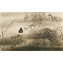 Ducks - CNAG003552