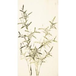 Green Bamboo - CNAG003611