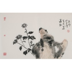 Chrysanthemum - CNAG003742