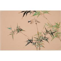 Bamboo - CNAG003775