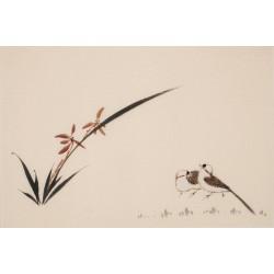 Orchid - CNAG003780