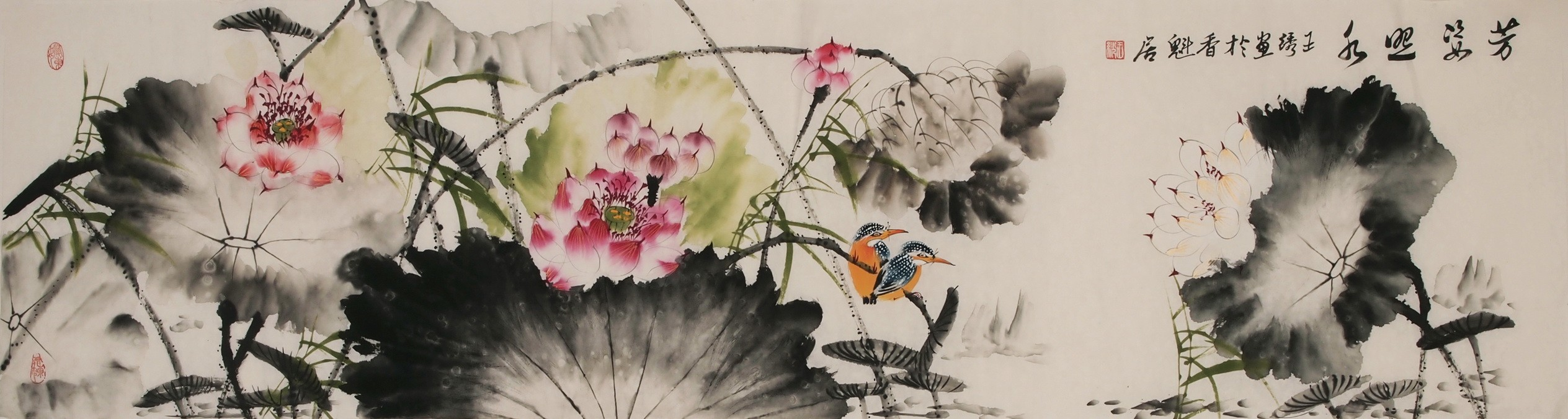 Kingfisher - CNAG004004