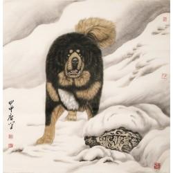 Dog - CNAG004487