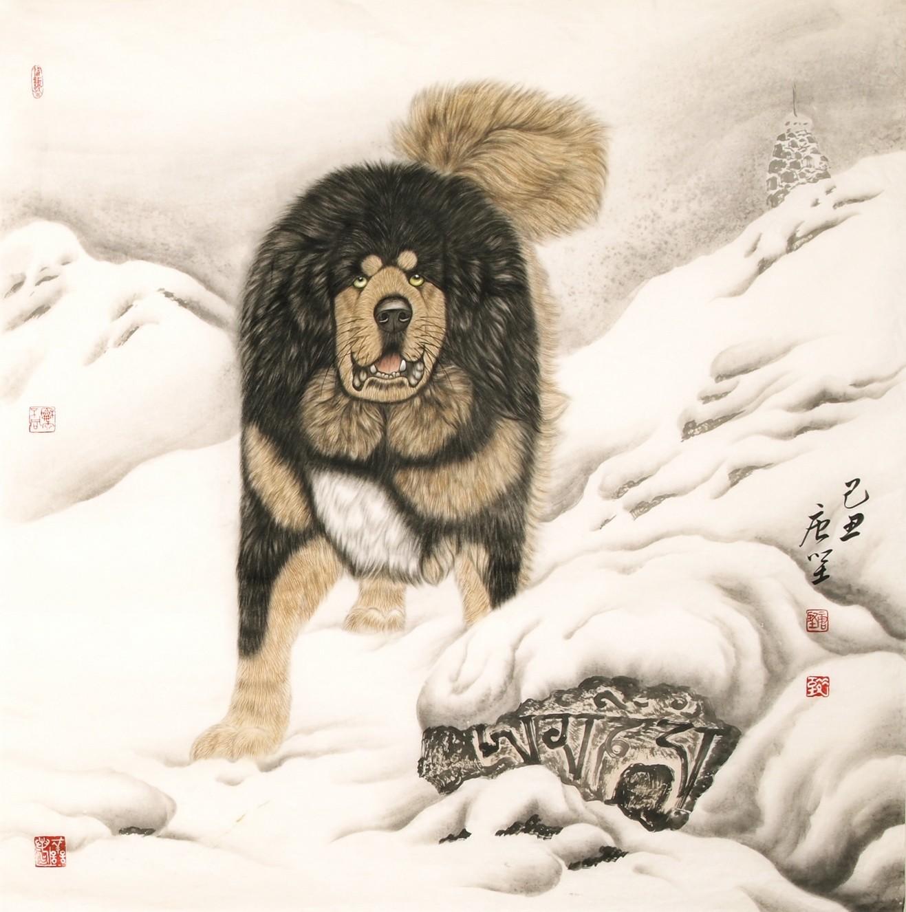 Dog - CNAG004493