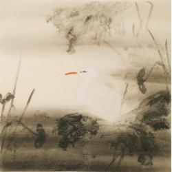 Egret - CNAG005408