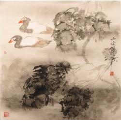 Ducks - CNAG005411