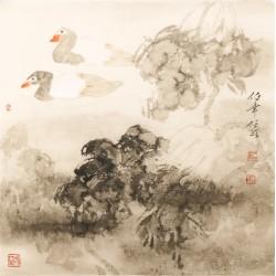 Ducks - CNAG005414
