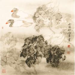 Ducks - CNAG005416