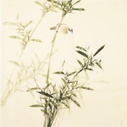 Green Bamboo - CNAG005436
