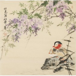 Mandarin Duck - CNAG005495