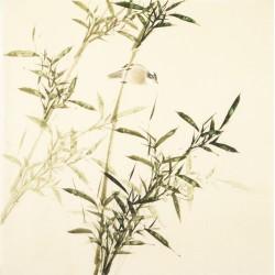 Green Bamboo - CNAG005502