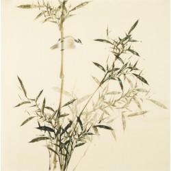 Green Bamboo - CNAG005503