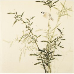 Green Bamboo - CNAG005504