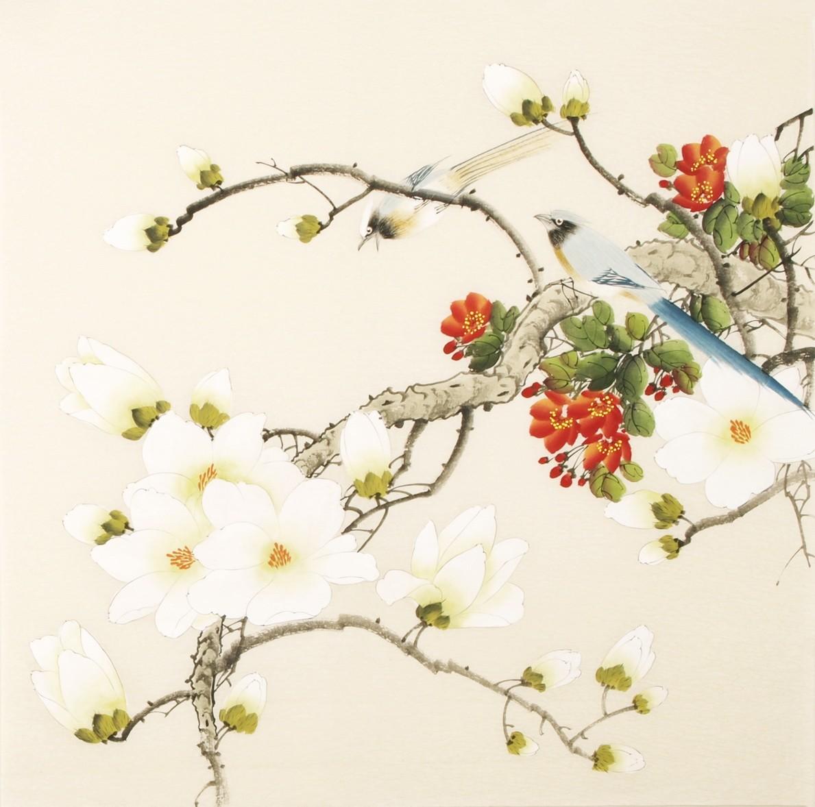 Orchid - CNAG005585