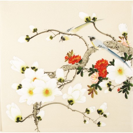 Orchid - CNAG005590
