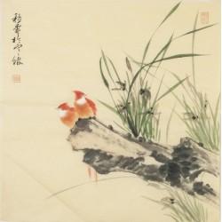 Orchid - CNAG005602