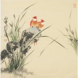 Orchid - CNAG005604