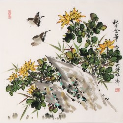 Chrysanthemum - CNAG005644
