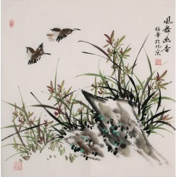 Orchid - CNAG005698
