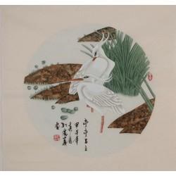 Egret - CNAG005700