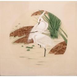 Egret - CNAG005714