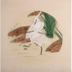 Egret - CNAG005729