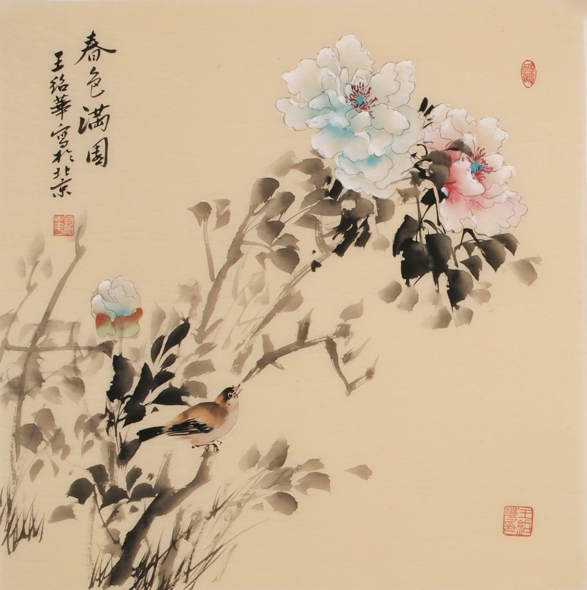 Hibiscus - CNAG005730