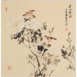 Hibiscus - CNAG005738