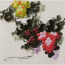 Grapes - CNAG005851
