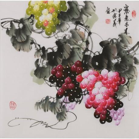 Grapes - CNAG005871