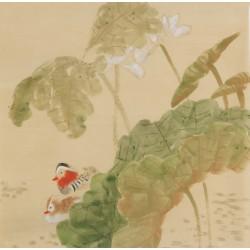 Mandarin Duck - CNAG005953
