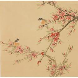 Peach Blossom - CNAG005957