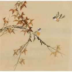 Other Birds - CNAG005962