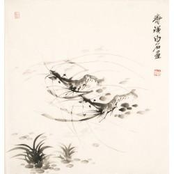 Shrimp - CNAG006081