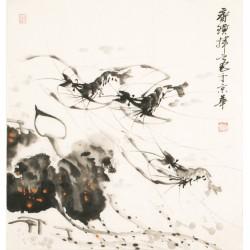 Shrimp - CNAG006085