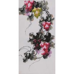 Grapes - CNAG000611