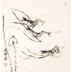 Shrimp - CNAG006159