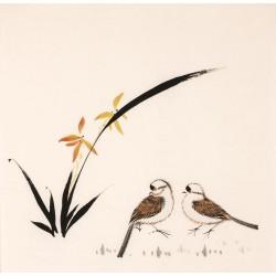 Orchid - CNAG006204